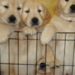 Cute puppies at Elizabeth Ann Kennels, Bed, Biscuit & Resort Spa in Stirling NJ