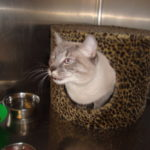 Cat boarding at Elizabeth Ann Kennels, Bed, Biscuit & Resort Spa in Stirling NJ