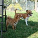 Playtime at Elizabeth Ann Kennels, Bed, Biscuit & Resort Spa in Stirling NJ
