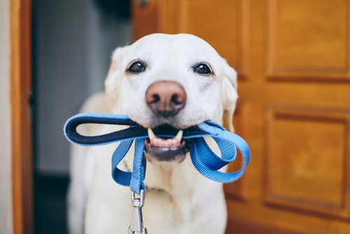Schedule a Visit Dog leash